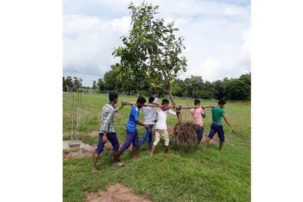 पेड़ को काटकर नहीं…कंधे पर उठाकर दूसरी जगह किया शिफ्ट, दुनिया को सीख देने वाली फोटो